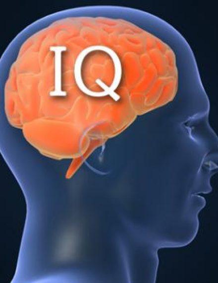 甚麼是智慧?